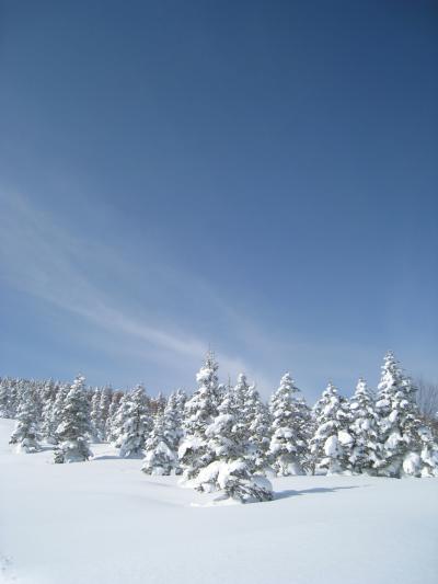 標高2000Mに広がる奥志賀高原 de の~んびりスキー ①