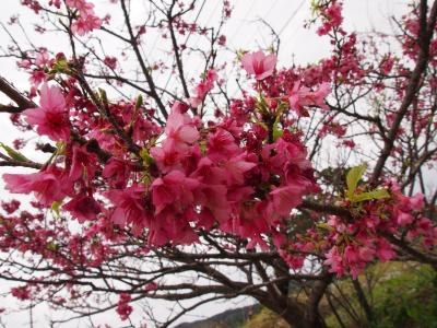 春の沖縄本島ドライブ2♪