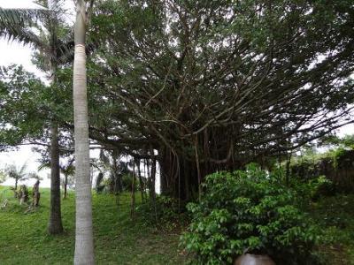 20120215沖縄の友達と観光地めぐり(二日目 熱帯ドリームセンター ②)