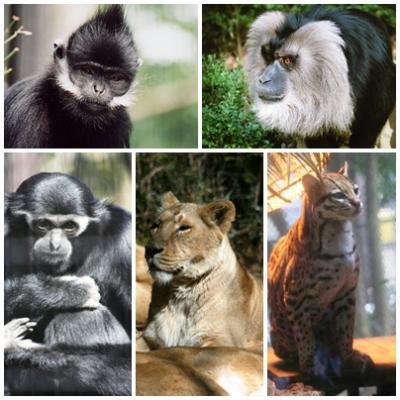 動物園ってとっても楽しいところですね!!ー 「よこはま動物園ズーラシア」へ珍しい動物を求めて