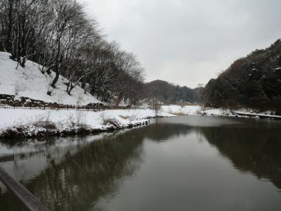 神奈川県立四季の森公園 2012年2月雪景色