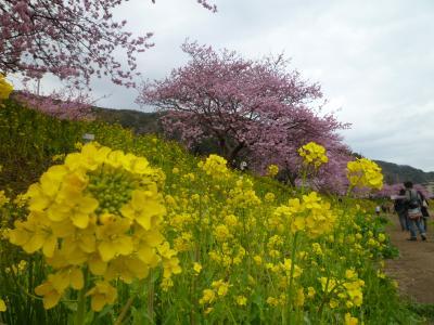 一足先に春を満喫~みなみの桜と菜の花まつり~
