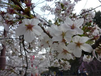 桜 2012.04