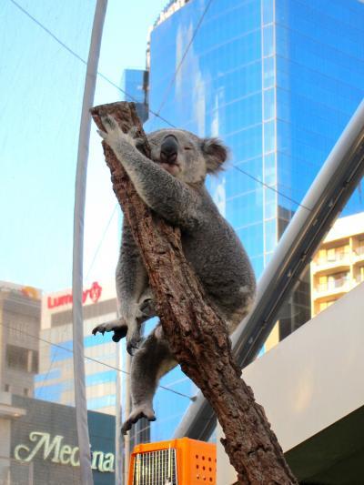 シドニーの旅③