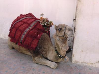 モロッコ旅行② 迷宮のフェズ~イフラン~ミデルト~エルフード。