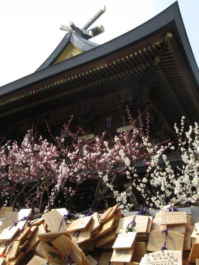 小江戸の梅の香散歩