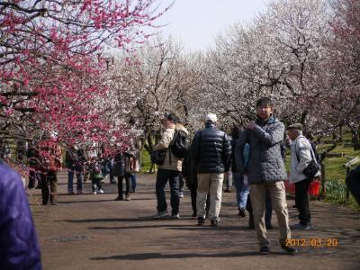 府中・郷土の森・梅園「春の訪れ」