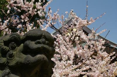 やっと春の息吹が・・湯島天神の梅が満開になりました!