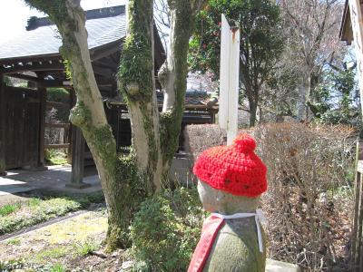 興禅院(川口安行)の梅 今年は遅い開花☆2012/03/25