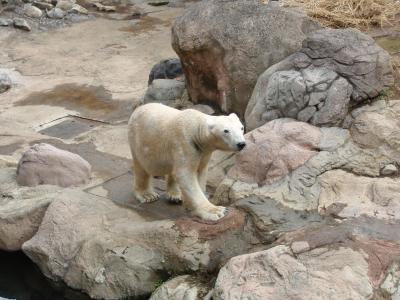 動物園の赤ちゃんに会いに!よこはま動物園ズーラシア