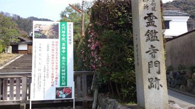 京都 霊艦寺 ぶらり春の特別拝観