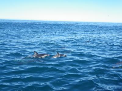 夏の終わりのニュージーランド南島旅行⑥