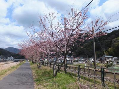 南伊豆へ③・静岡県で最初にソメイヨシノが満開になったお吉ヶ渕へ
