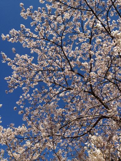 2012年春~のんびり村の桜と桃~下田市蓮台寺