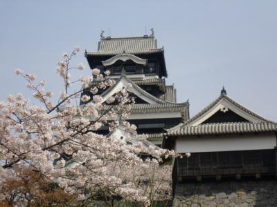 熊本城と桜のコラボは最高