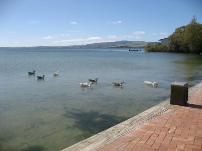 ロトルア湖展望
