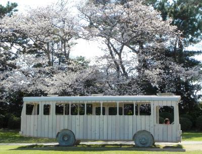 満開の桜に包まれて~山口県宇部市・常盤公園~