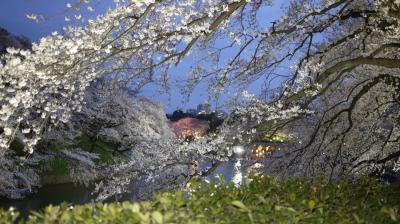 飯田橋駅から靖国神社、千鳥ヶ淵の桜