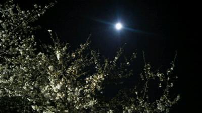 井の頭公園 日中の喧騒を忘れてしっとり夜桜散歩