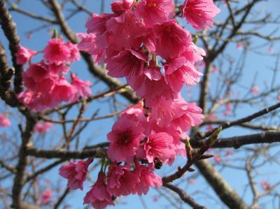 ♪女子旅♪for沖縄~気ままな3人◎美ら桜&マーサムン~