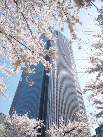 東京・東京ミッドタウン(お花見2012)