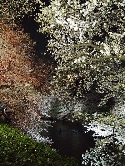 2012 桜 千鳥が淵のライトアップ