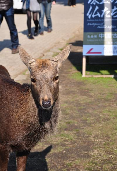 奈良・鹿~っ!!いっぱいと奈良の大仏と螺鈿紫檀五弦琵琶を見に行く♪