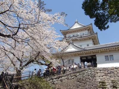 小田原城址公園の満開桜 (小田原、箱根)