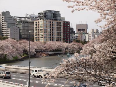 お花見2012:半蔵門~靖国神社