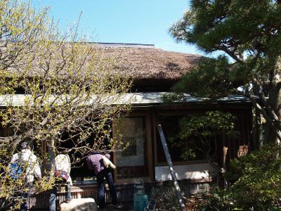 鎌倉・大仏次郎茶亭公開-2012年春