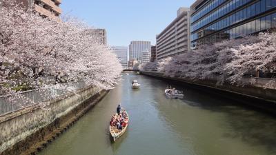 ☆彡お江戸深川発 東京桜巡り