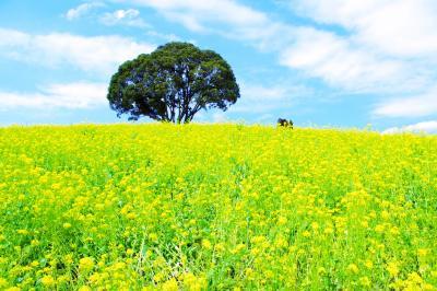 春のマザー牧場で、のほほん。