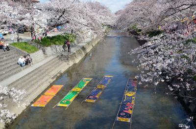 日本の桜名所百選:愛知県 五条川