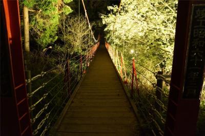 ローカル地:蒲原御殿山 夜桜に出向く