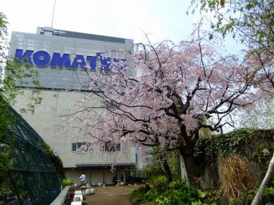 屋上庭園の枝垂桜