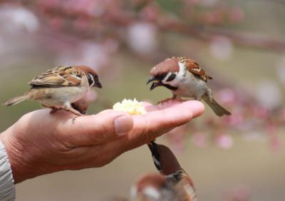 鶴見緑地のほほん記 メジロ・雀・柴犬・桜・サボテンの花 楽しさテンコ盛り