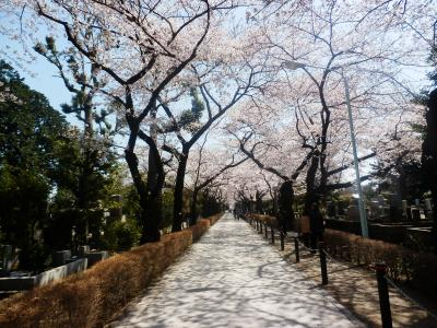 東京2012桜 【6】青山霊園