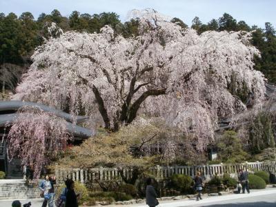 パジェロミニで走破する!?彩甲斐街道、桜の旅 その3 ―身延山久遠寺の桜を見に行くの巻―