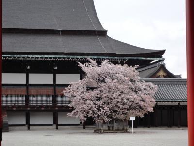 2012 京都の桜