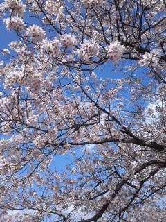 万博で桜咲く 桜祭りからガンバ初勝利まで
