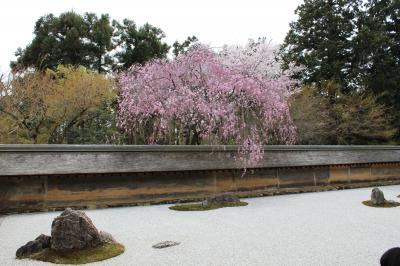仁和寺&龍安寺の桜