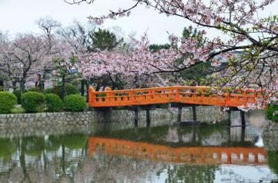 九華公園の桜雨