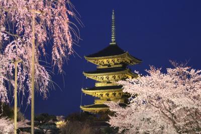 東寺のさくら