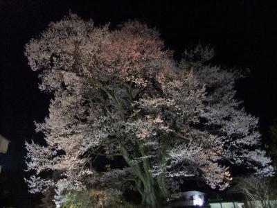 桜を追いかけ飯田市・(安富桜)