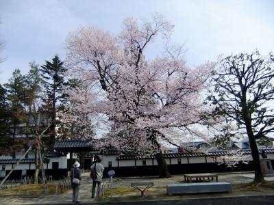 桜を追いかけ飯田市・美術博物館周り