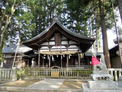 桜を追いかけて飯田市・愛宕神社で清秀桜と千代蔵桜と江戸彼岸と???
