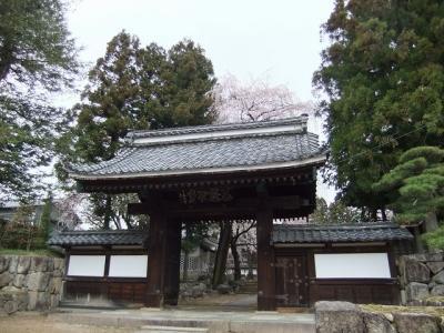 桜を追いかけ飯田市・大雄寺