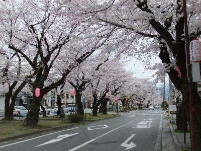 飯田市で桜めぐり