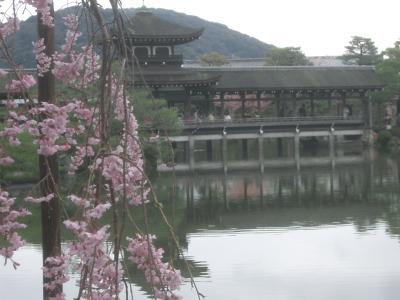 桜に埋まる平安神宮神苑。別世界です。