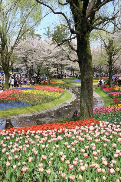 チューリップと桜の昭和記念公園ファン倶楽部ミニオフ会(2)咲いた咲いたチューリップの花が、並んだ並んだ大勢の人と